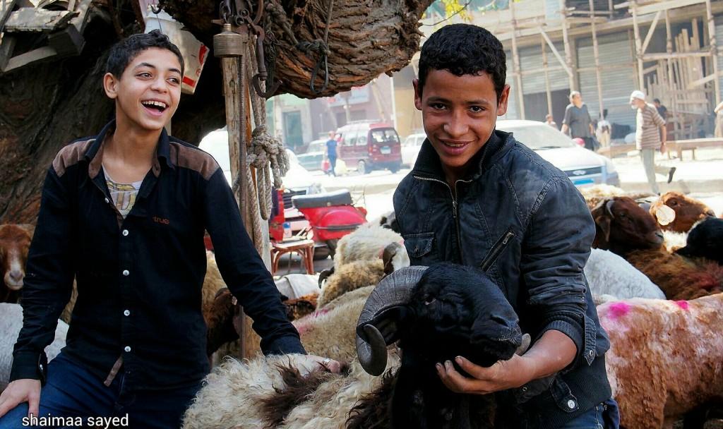 فرحة طفلين بأضحية عيد الاضحى فى شوادر بيع الخرفان